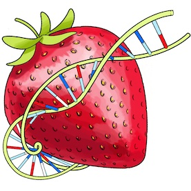 Strawberry DNA